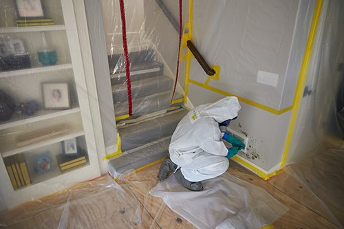 Never Hire A Company That Offers Mold Testing And Mold Remediation