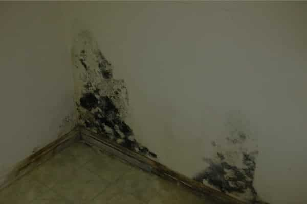 dangers of mold