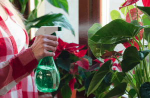 house plants that prevent mold