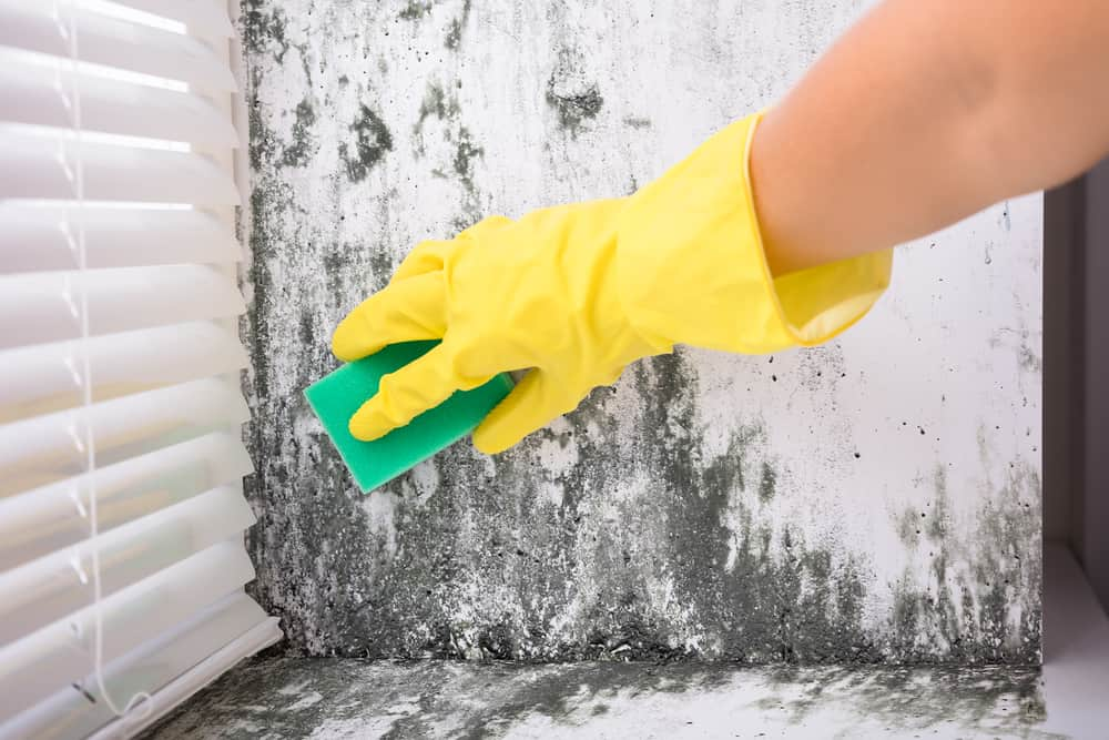 Mold Vs. Mildew – What's The Difference?